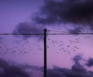photography, purple, and sky image