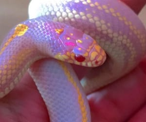pink, snake, and cute image