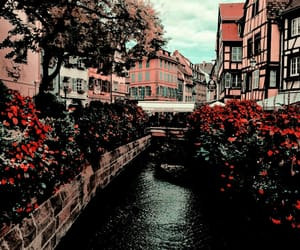 travel, flowers, and nature image