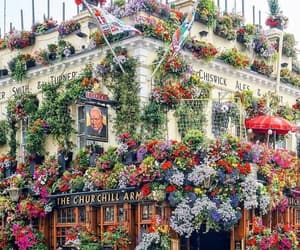 flowers, london, and beautiful image