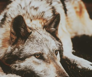 adventure, aesthetic, and animals image