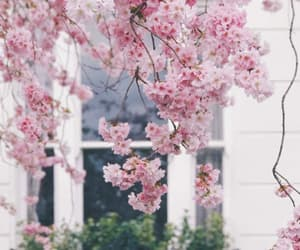 blossom, flowers, and spring image