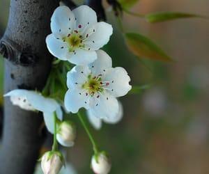 belleza, flores, and florecer image