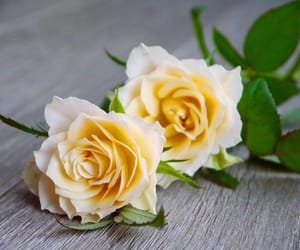 flower, rose, and yellow image
