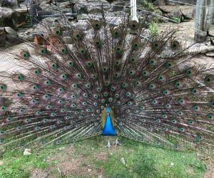 animal, bird, and blue image