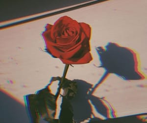 rose, flower, and red image