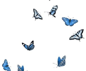 butterfly, blue, and editing image
