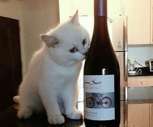 cat, cute, and wine image