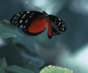 beautiful, freedom, and butterfly image