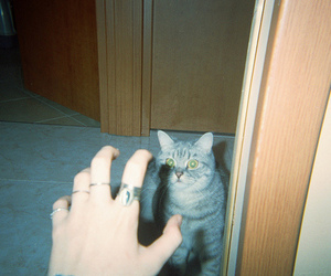 cat, hand, and indie image