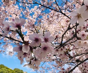 beautiful, cherry, and spring image
