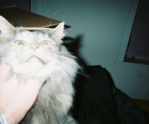 cat, hipster, and indie image