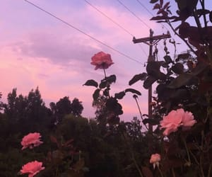 pink, sky, and flowers image