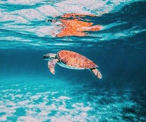 animal, inspiration, and sea image