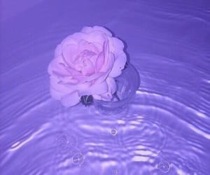 purple, rose, and aestethic image