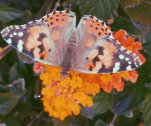 butterfly, flowers, and photo image