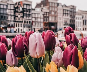 flowers, amsterdam, and beautiful image