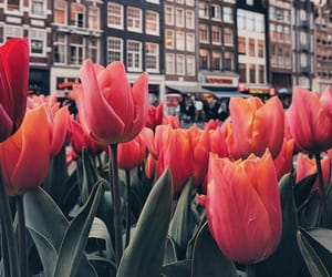 travel, tulips, and building image