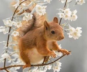 blossoms, spring, and squirrel image