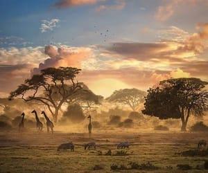 animal, nature, and wild image