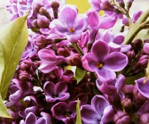 art, flower, and purple image