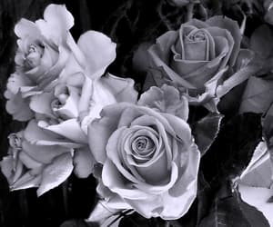 black and white, flowers, and my photography image