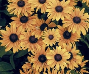 color, flowers, and Jaune image