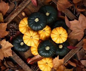 autumn, inspiracion, and calabazas image