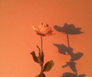 orange, flowers, and aesthetic image