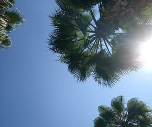 palms, sun, and travel image