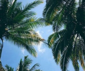 palm trees, nature, and palms image