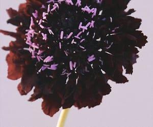 dark purple, nature, and flower image