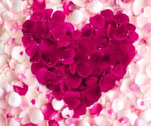 rose, heart, and hearts image