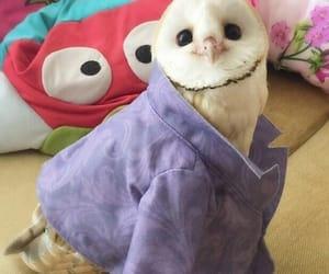 owl, animal, and cute image