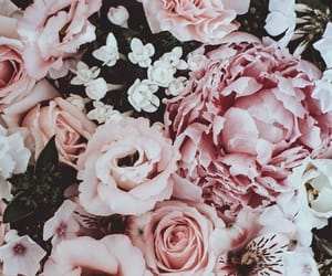 rose, wallpaper, and flower image