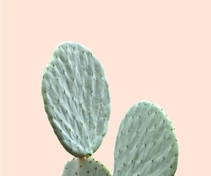 cactus, plants, and wallpaper image