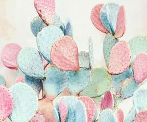 cactus, pink, and nature image