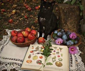 autumn, fruit, and photo image