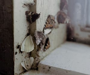 window, wings, and lepidoptera image