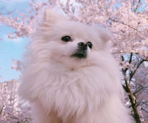 adorable, animals, and blossom image