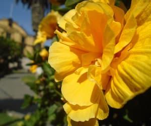amarillo, flores, and naturaleza image