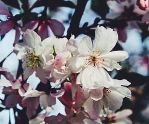 blossoms, flower, and nature image