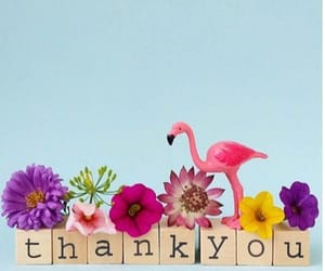 block, flamingo, and thankyou image