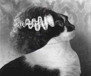 Bride of Frankenstein and cat image
