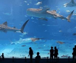 aquarium, hammerhead, and ocean image