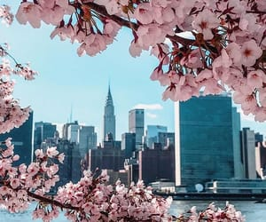 flowers, new york, and nyc image