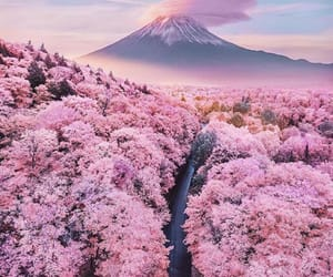 blossom, forest, and japan image