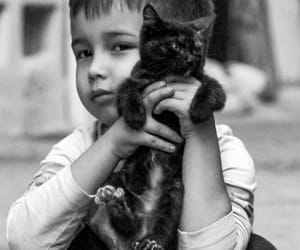 animals, black and white, and cat image
