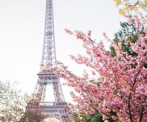 paris, pink, and spring image