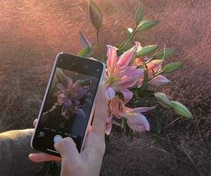 flowers, lily, and phone image